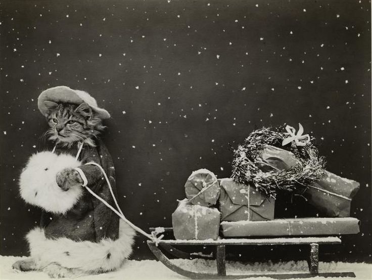 vintage everyday: Funny Vintage Pictures of Dogs and Cats Greeting Christmas