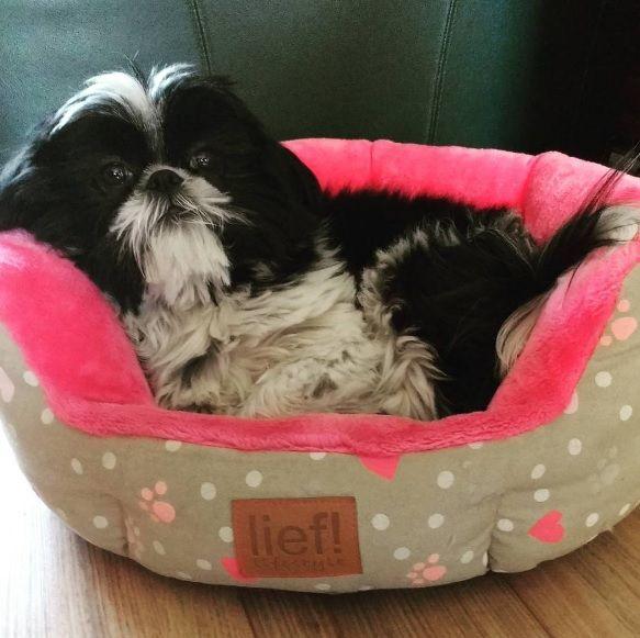 lief! lifestyle dierenaccessoires voor kat & hond - roze hondenmandje | pets accessories for cats & dogs