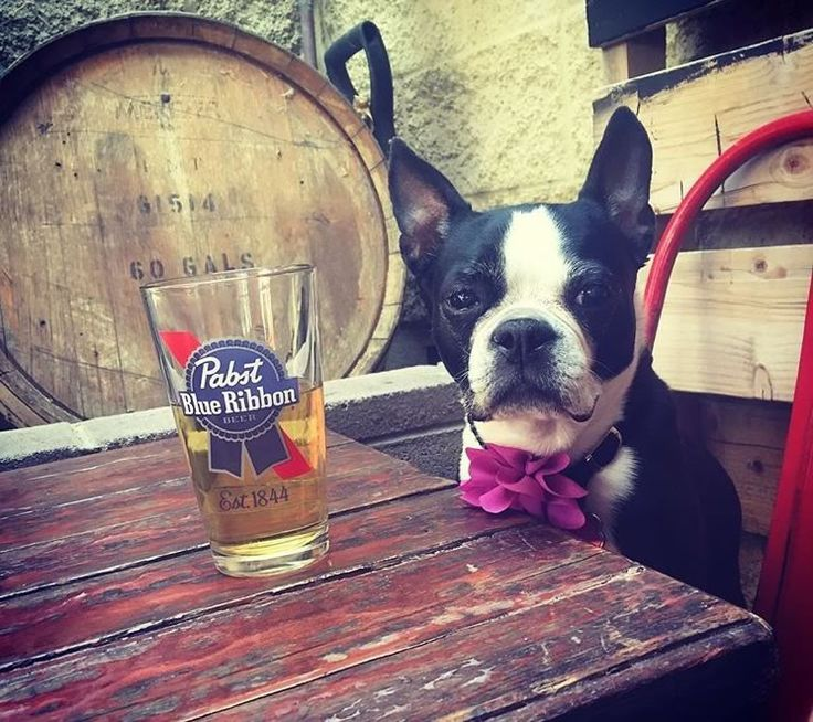 In 2011, dog-friendly patios got real in Maricopa County. A few rules apply, but there are establishments all over town that are more than welcoming to the entire family — including your four-legged companions. If you've got a pup you'd rather have by your side while wining and dining in...