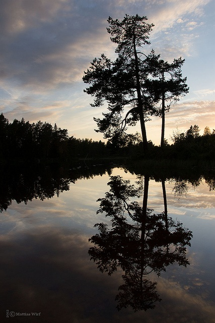 Träd vid Björktjärn