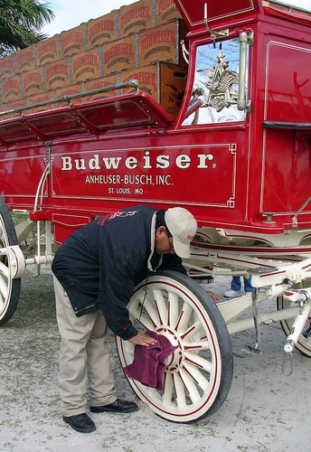 The Budweiser wagons are from Studebaker (circa 1900) and converted to deliver beer.
