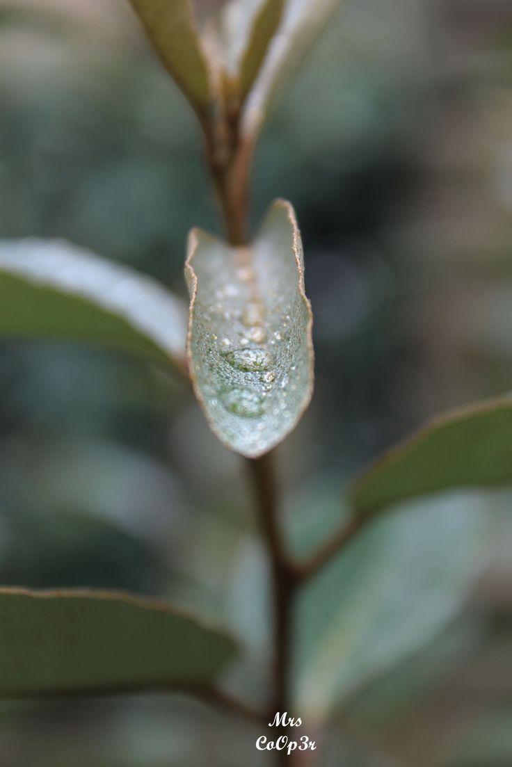 Un week-end de pluie