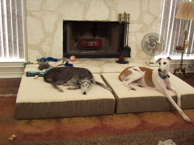40 best greyhounds! images on pinterest