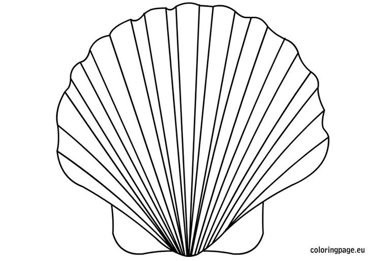 Drawn Shell Flower