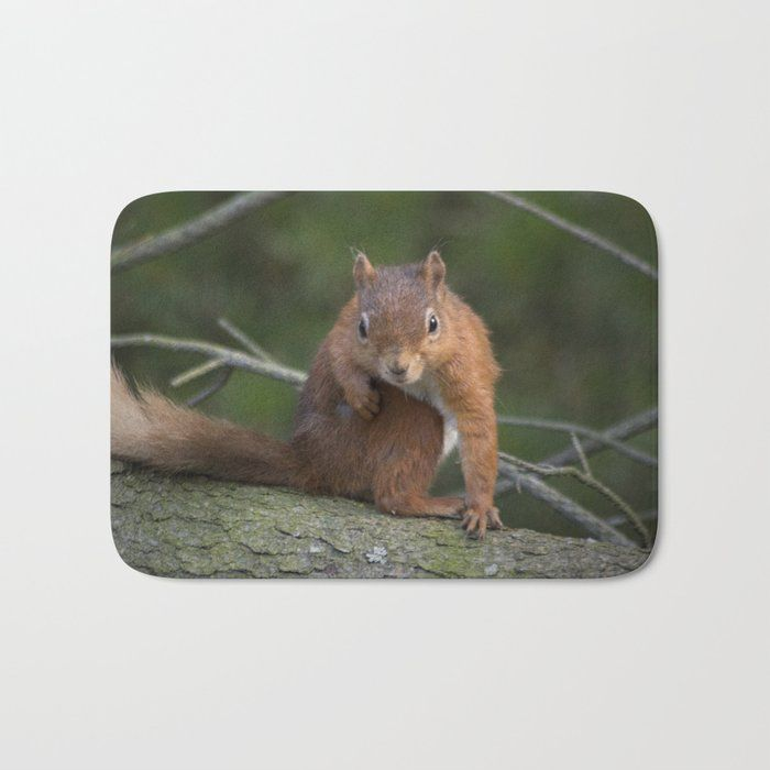 The Perfect Bath Mats Fuzzy Foamy And Finely Enhanced With Brilliant Art Featuring A Soft Quick Dry Microfiber Surface Memory F Red Squirrel Squirrel Cute