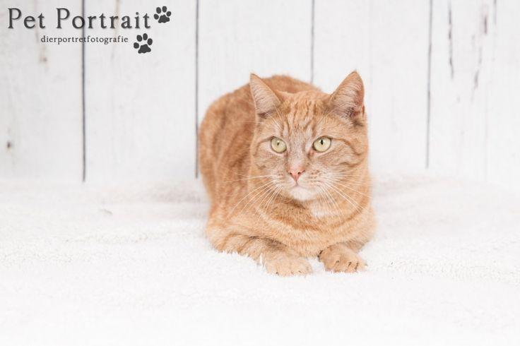 Kattenfotografie Oude Wetering - Fotoshoot voor twee katten-1