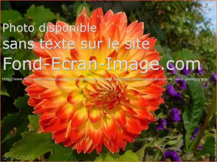 103 best les belles fleurs images on pinterest | flowers