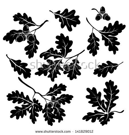 Set oak branches with leaves and acorns, black silhouettes on white  background. Vector