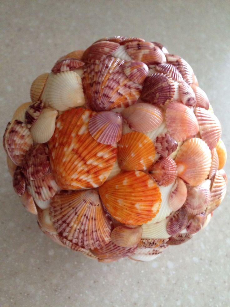 Orange Calico Scallop Shells