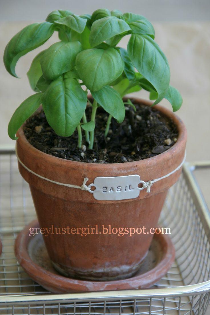 planten bascilicum