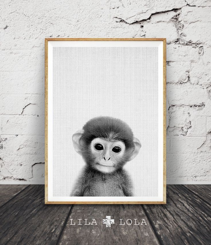 Joli bébé singe impression, Art mural chambre d'enfant, African Safari Jungle décor Animal, genre neutre bébés enfants cadeau, téléchargement numérique instantané par LILAxLOLA sur Etsy https://www.etsy.com/ca-fr/listing/398850845/joli-bebe-singe-impression-art-mural