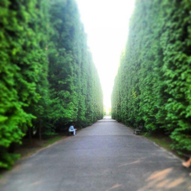 #Oliwa #Park in #Gdansk | #valley #tree #green