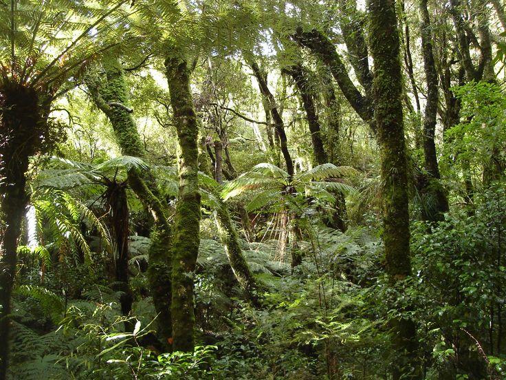 forest images Original file  (2,048 × 1,536 pixels