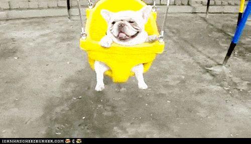 Swingin' Frenchie