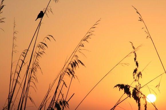 Amanecer en Menorca junto a un pajarito muy simpático que no paraba de piular. #menorcamediterranea #amanecerenmenorca