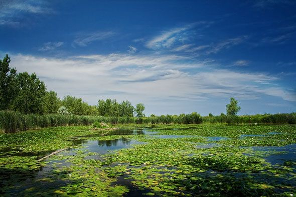 Urban wilderness at Tommy Thompson Park, also referred to as Leslie Street Spit