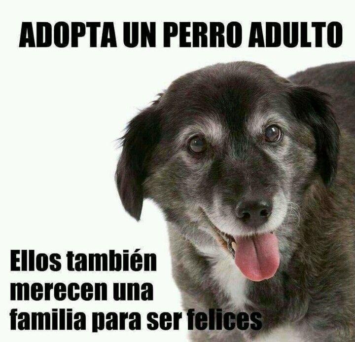 Adopta un perro adulto, ellos también merecen una familia para ser felices ;)
