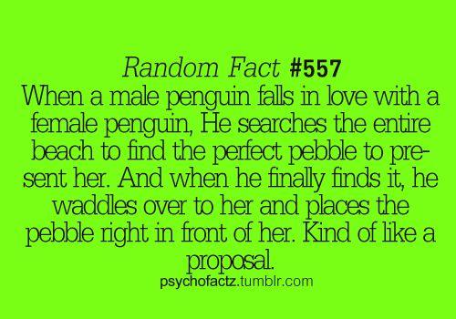 random fact #557; so. effing. cute.