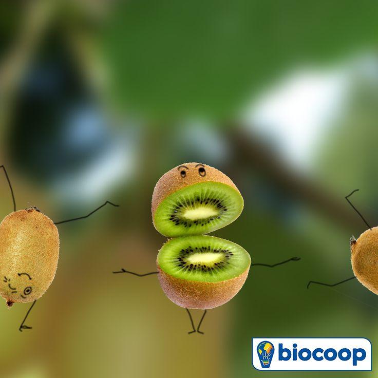 En décembre, le kiwi envahit Biocoop !