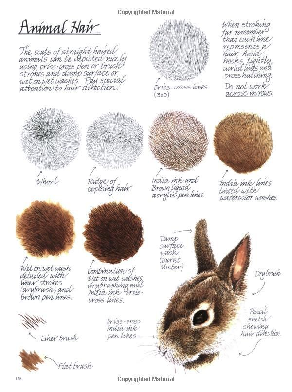 Drawing animal hair by Claudia Nice from her book: Creating Textures in Pen & Ink with Watercolor - http://www.amazon.com/reader/1581807252/?state=01111&ref=rdr_sb_li_sims_1#reader_1581807252