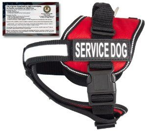 Ada Service Dog Questions I Can Ask