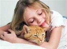 Сайт с интересной информации о кошках.