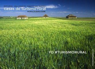 Paisaje de primavera en Valladolid. Palomares y campos de cereal. Tierra de Campos.