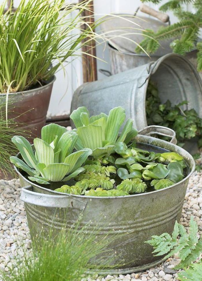 Une bassine en zinc s'adapte à tous les jardins, zen ou rustiques. Si vous y mettez des plantes à feuillage décoratif, votre bassin gardera sa beauté avant, pendant et après la floraison. Plantes Jacinthe d'eau (eichhornia crassipes), laitue d'eau (pistia stratiotes) et petite fougère flottante (salvinia natans).