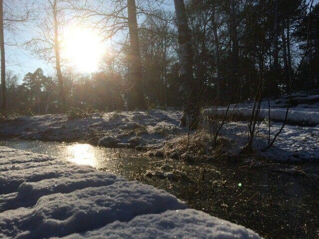 Winter in de Veluwe