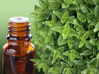 Image result for 5 Amazing Oregano Oil Benefits