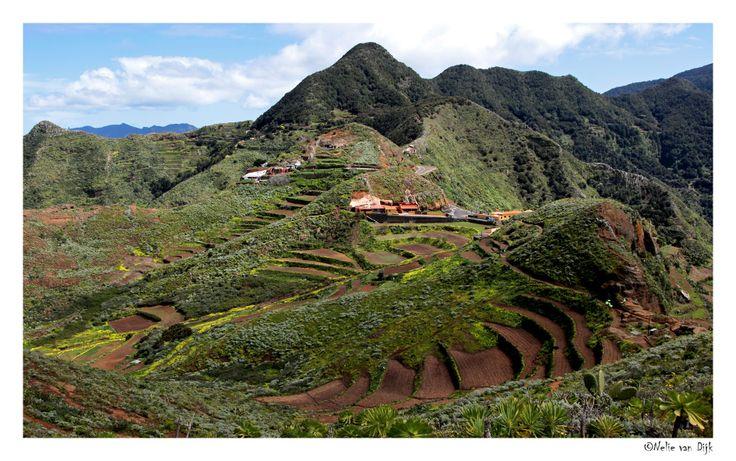 Terraslandschap Tenerife. Bij een wandeling vanuit Cruz del Carmen (960 m) in het noord-oosten van Tenerife kwamen we door het dorpje Chniamada (620 m) met zijn mooie terrashellingen. (Spain)