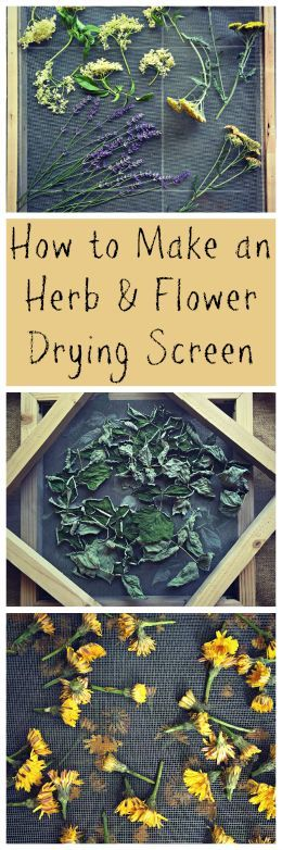 How to Make an Herb and Flower Drying Screen~ A great way to dry all of your herbs for use in the winter! www.growforagecookferment.com