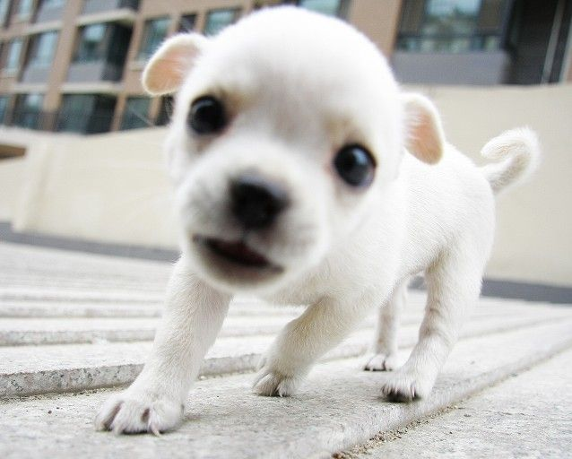 17 Best images about Puppies & Dogs~ on Pinterest