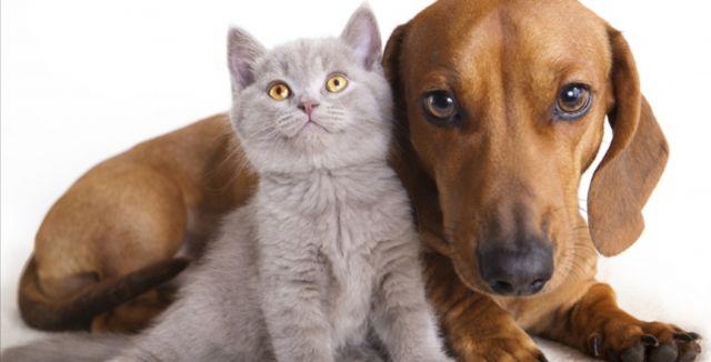 Veterináři varují před zápachem z tlamy psů a koček. Může způsobit vážné zdravotní potíže!