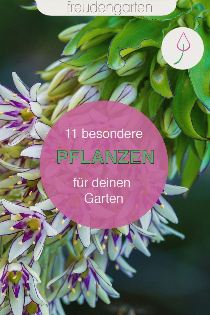 11 Aussergewohnliche Pflanzen Fur Den Garten Garten Pflanzen Pflanzen Straucher Garten