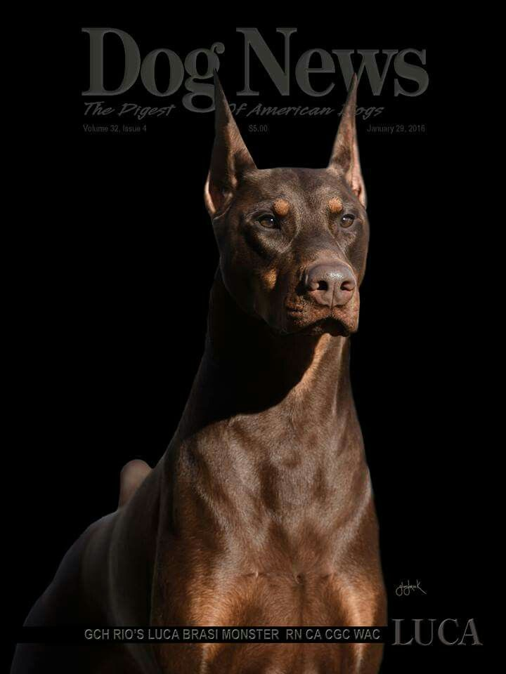 1203 Best Images About Bohemian And Victorian Decor On: 1203 Best Images About Dobermans! On Pinterest