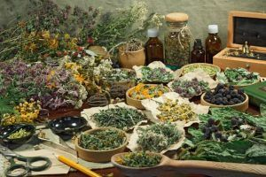 Amplia lista con los usos de las plantas medicinales en fitoterapia