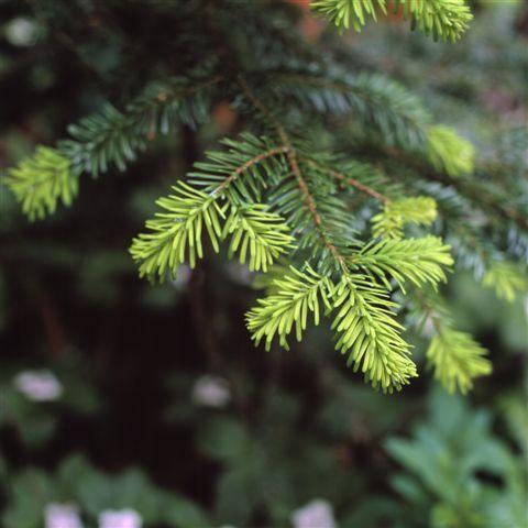 Live Christmas trees: Holiday, Girl Room, Favorite Things, Favorite Places, Christmas Ideas, Christmas Trees, Christmas Tree S