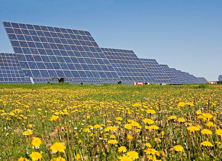 Los paneles solares fotovoltaicos generan electricidad por el efecto fotoeléctrico