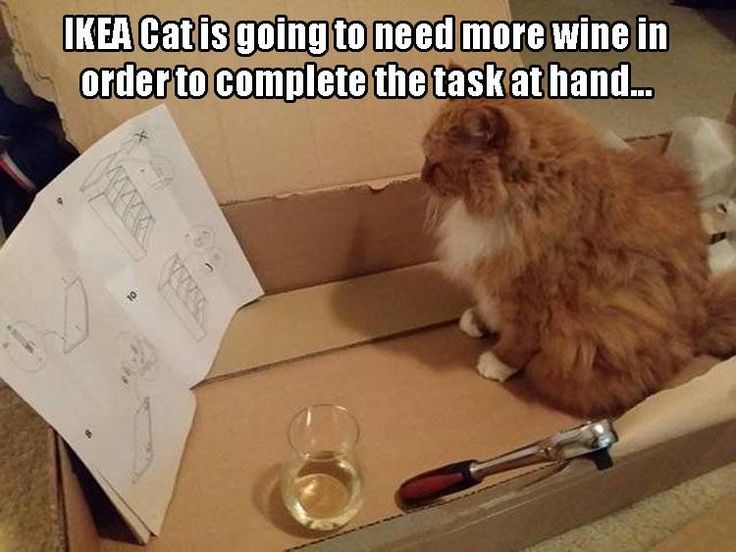 Funny Cat Drinking Meme : Best here funny kitty images beautiful cats