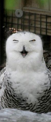 51 melhores imagens de for yu no pinterest corujas animais e como fandeluxe Choice Image