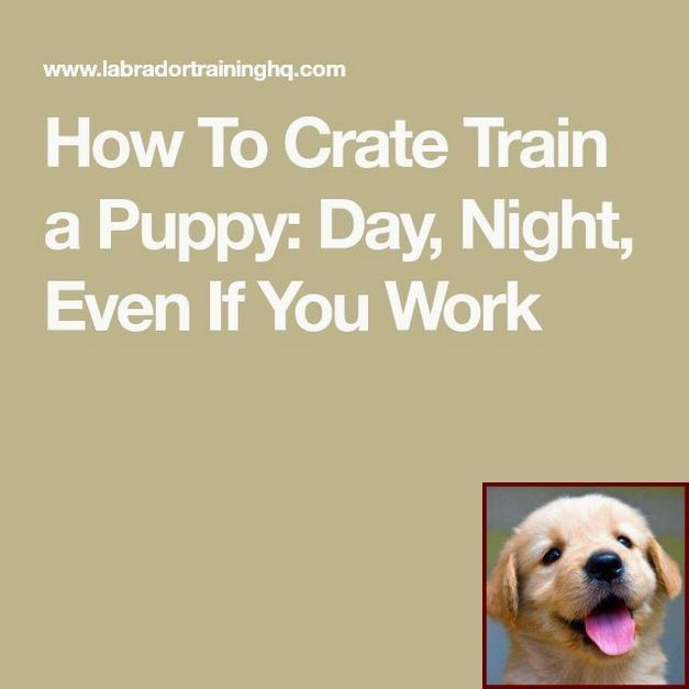 Potty Training A Boy Puppy And Clicker Training Aggressive Dogs