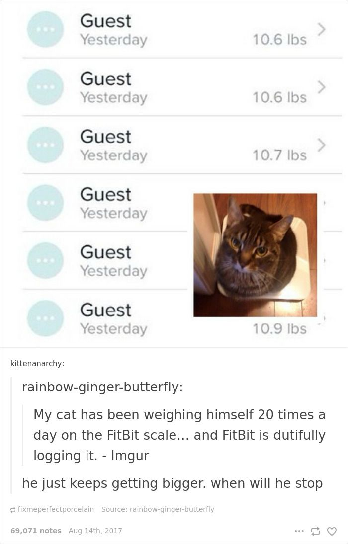 Best Time For A Good Laugh Images On Pinterest Funny Posts - 20 cat posts on tumblr that are impossible not to laugh at