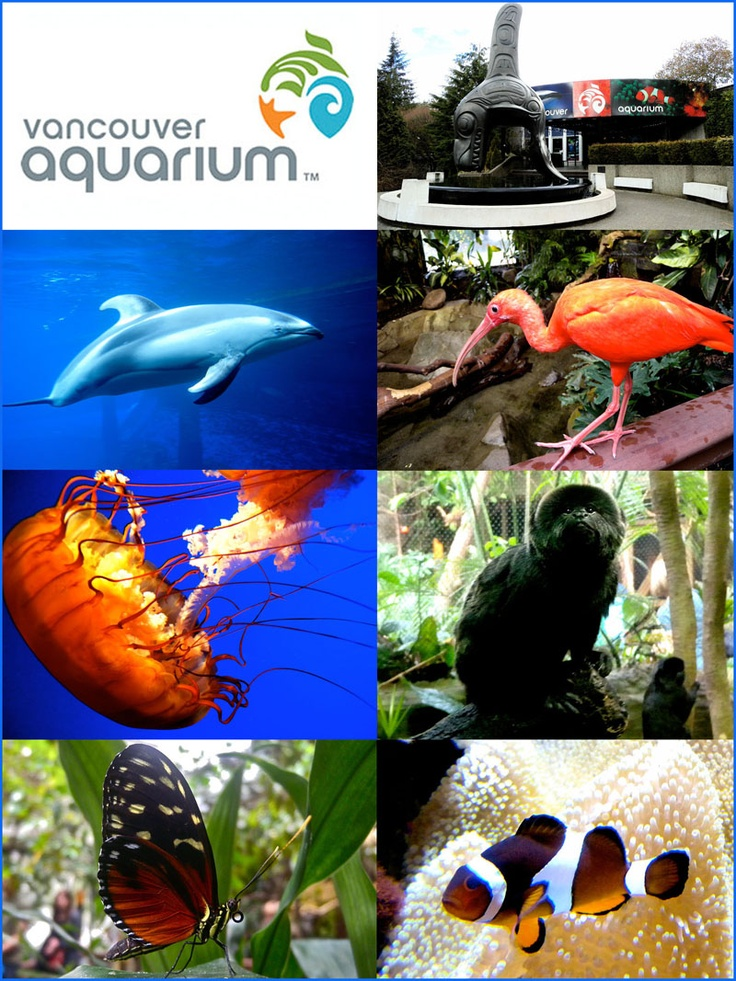 Vancouver Aquarium - this aquatic wonderland is home to all sorts of sea life in natural habitats. Enjoy close-up views of everything from penguins and whales to sea otters and colorful clownfish.