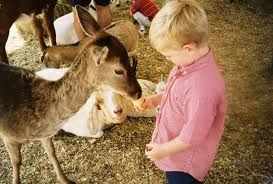 Child feeding a deer - we bring a petting zoo to you! California mobile petting zoo, rent today for your next event. Orange County, Santa Ana, Anaheim, Laguna Beach, Irving, LA, California -