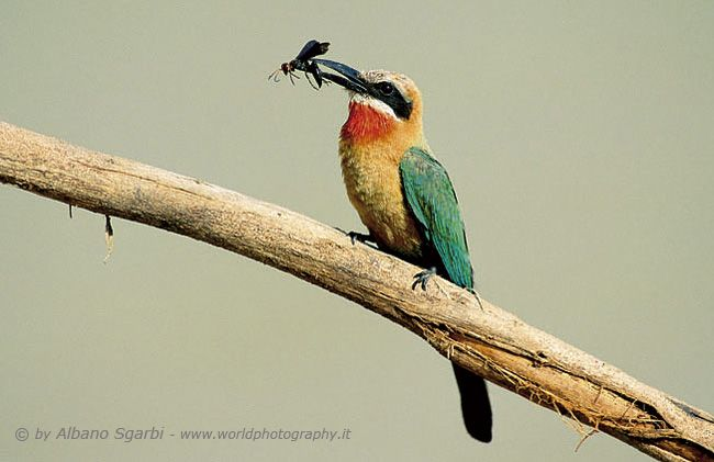 World Photography - Photographers Artists in the World - Artisti fotografi