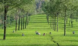 tour packages to munnar