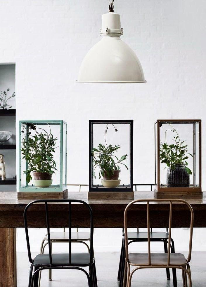 planter på væggen - Google-søgning