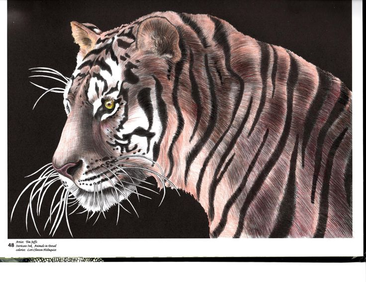 Anatomy Coloring Book Whsmith : Tiger by lori clinton holmquist intricate ink: animals in detail