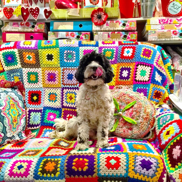 Gillian's #dog Betty Bou who is a #cavoodle or #cavapoo and extremely #fluffy !! Seen here on the The Gilliangladrag #Sofa of Fluffy Dreams